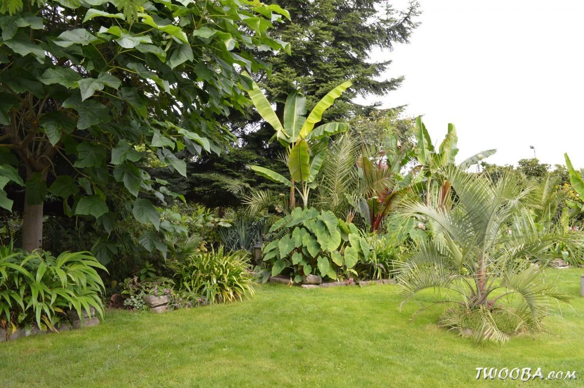 Jardin dans l'oise - Page 3 DSC_0517_50